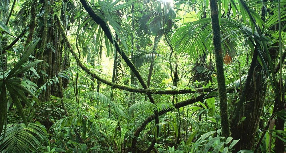 jungles tropicales Congo