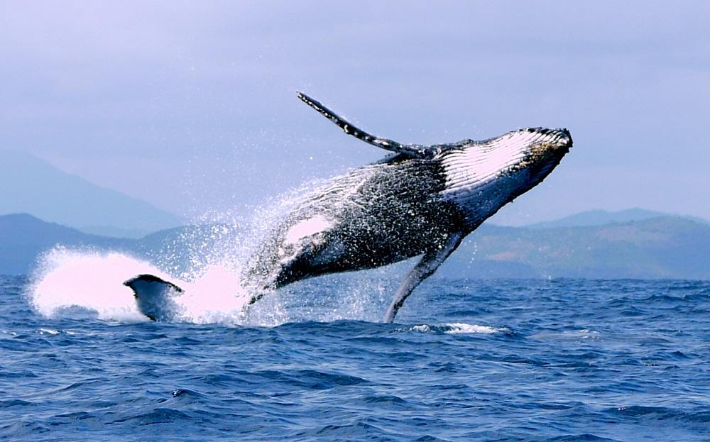 découvertes de baleine