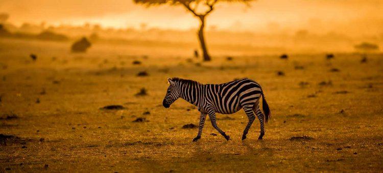 Organiser un voyage en Afrique du Sud