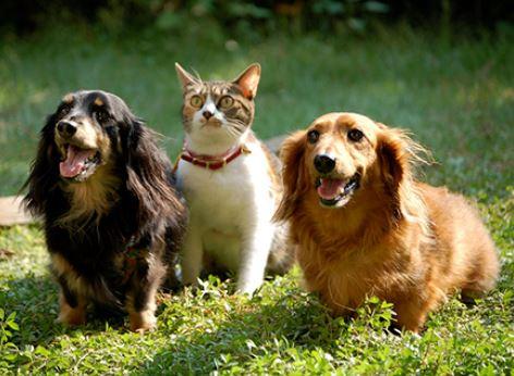 Emmener son chien et son chat en voyage